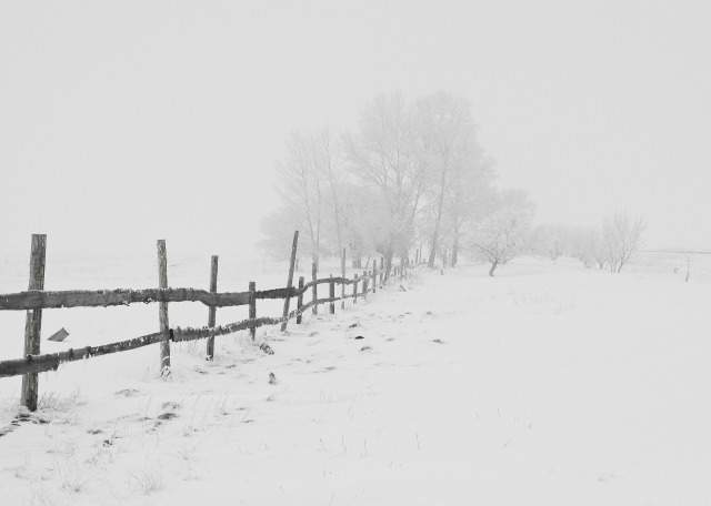 winter-20248_1920.jpg