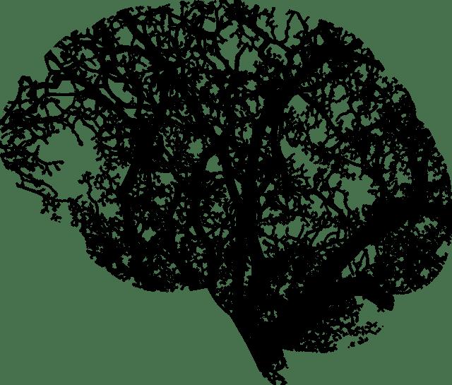 brain-2146817_1280.png