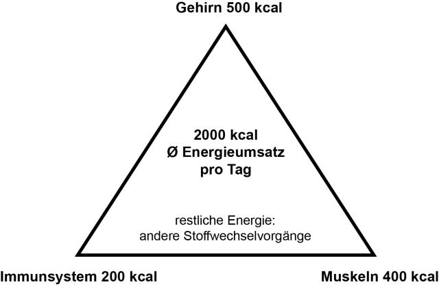 Energieumsatz_Pyramide