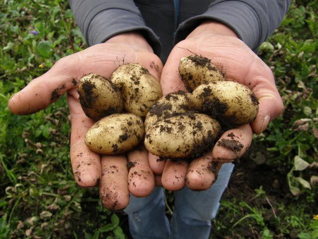 potatoes-2543686_1920