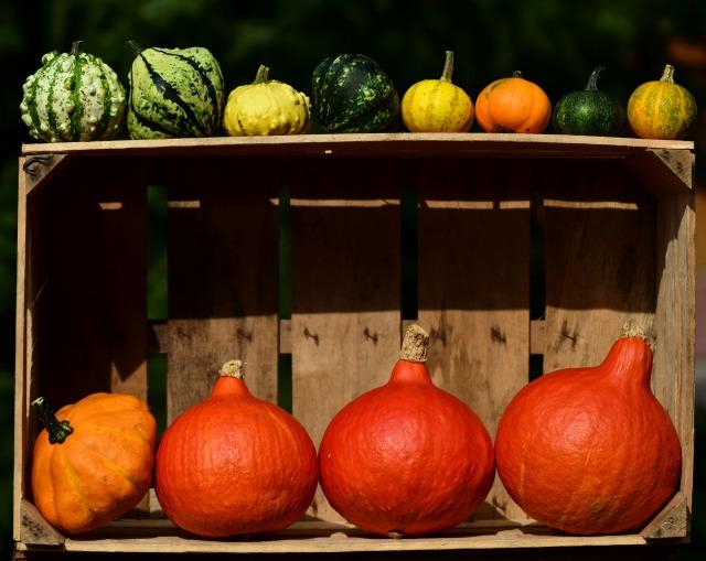 pumpkin-2691466_1920
