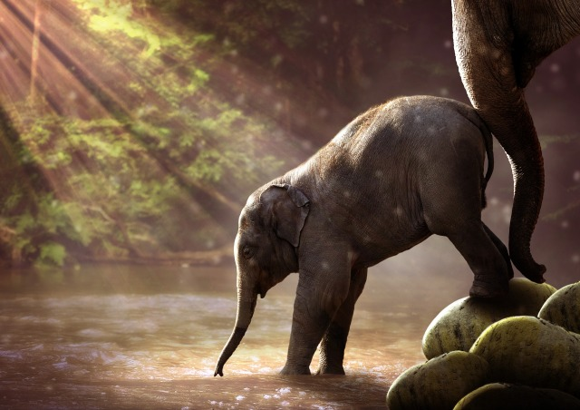 Elefantenbaby bekommt einen Schubs.